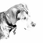 Overexposed Pup by maverickchild