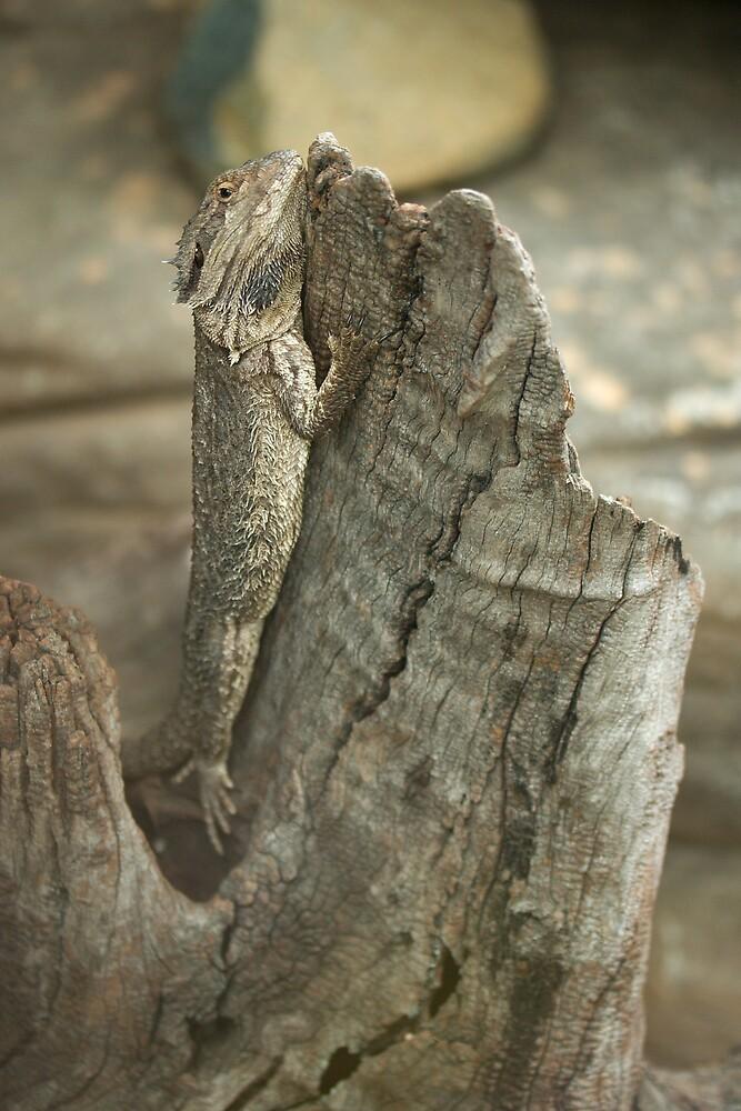 Bearded Dragon by PsiberTek