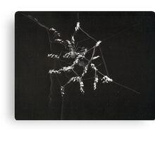 0015 - Brush and Ink - Spiders Canvas Print