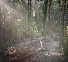 Tahune Bush Walk, Tasmania by Russell Charters