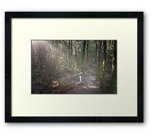Tahune Bush Walk, Tasmania Framed Print
