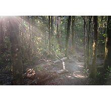 Tahune Bush Walk, Tasmania Photographic Print