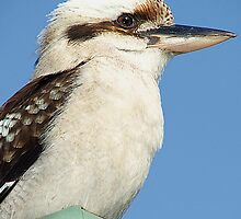 LAUGHING KOOKABURRA by magnette55