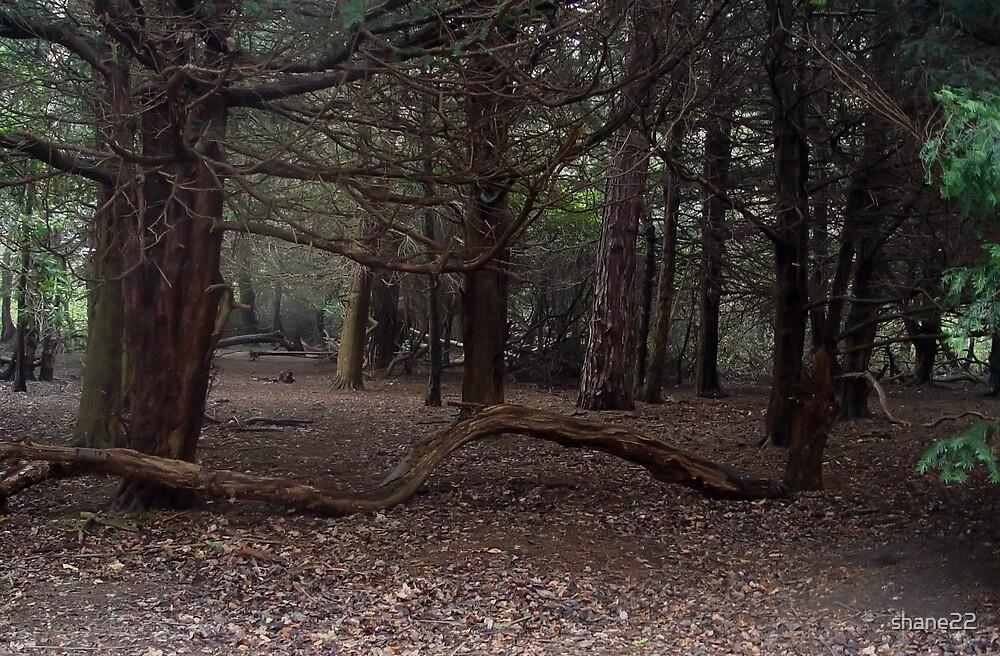 Dark Wood by shane22