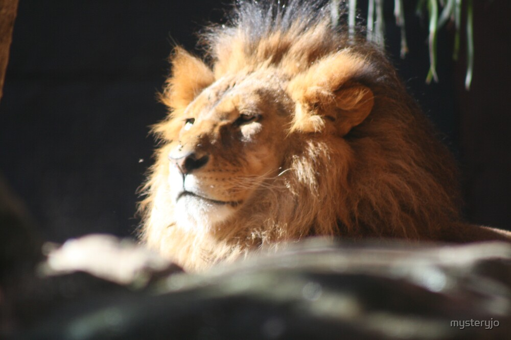 Lion by mysteryjo