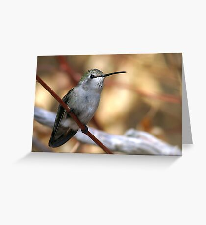 Hummer In Fall Greeting Card