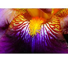 Inside An Iris 2 Photographic Print