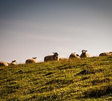 Sheep at Kåseberga by frommyhorizon