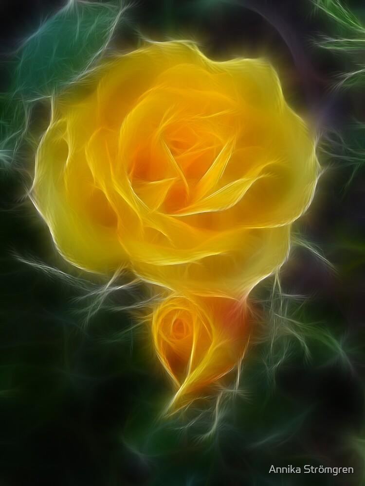 Rose 2 by Annika Strömgren