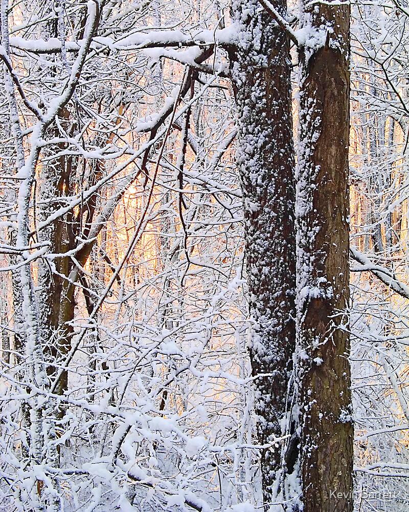 Snowy Wednesday Morning by Kevin Barrett