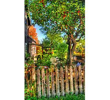 The Apple Tree Photographic Print