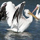 Perfect Landing by paula whatley