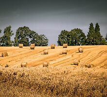 Harvest time by numgallery