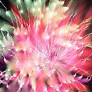 fireworks 12/3/17 by david gilliver