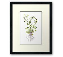 Cursed Crowfoot - Ranunculus sceleratus Framed Print