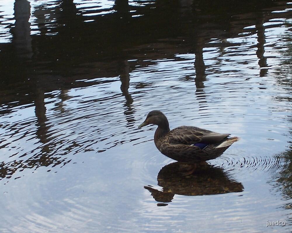 Double Duck? by jaedco