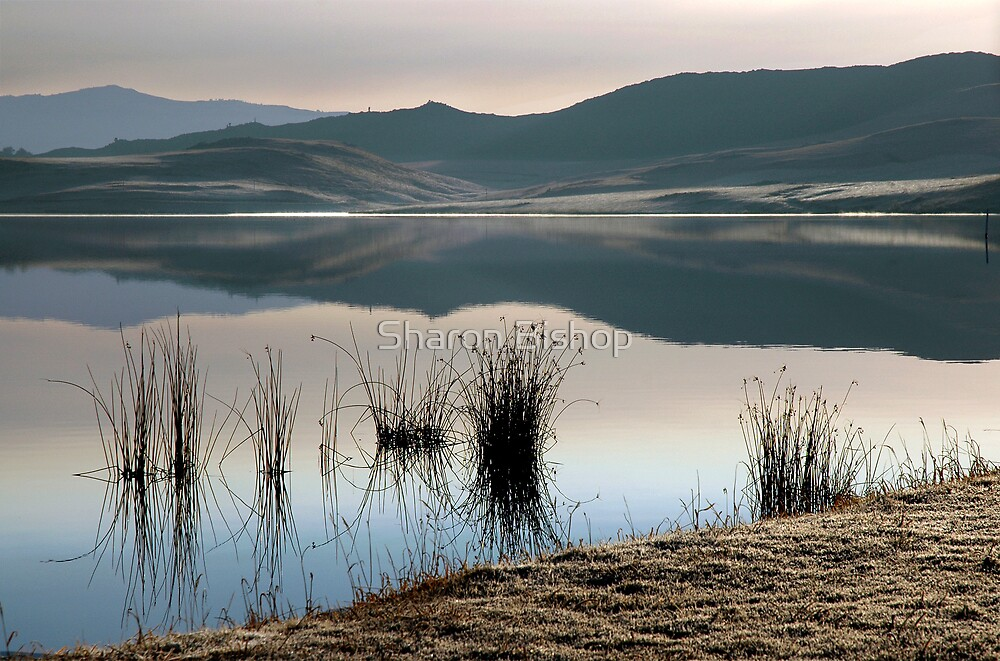 Winter landscape #2 by Sharon Bishop