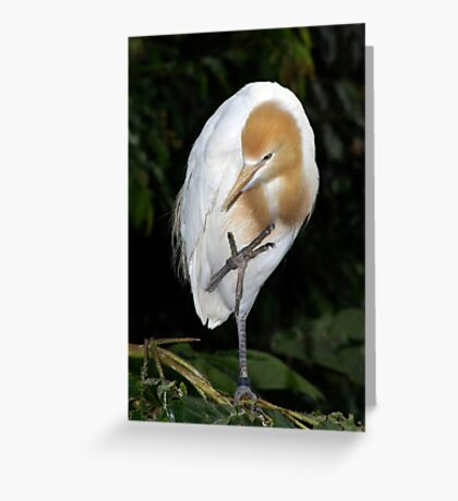 Back Off !  I know karate. Greeting Card