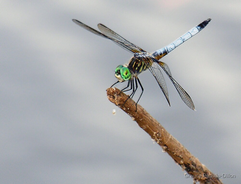 Dragonfly by Grayce Pedulla-Dillon