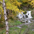 Spearfish Canyon by traciholter