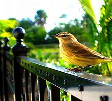 Little Bird by AmeliaStrazz