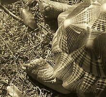 Turtle by randi1972