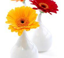 Vases by Elena Elisseeva