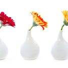 Three vases  by Elena Elisseeva
