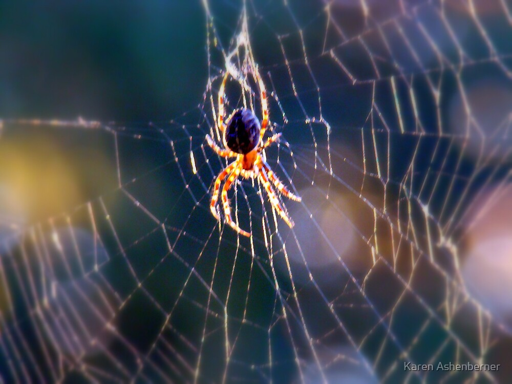 I Hate Spiders! by Karen Ashenberner