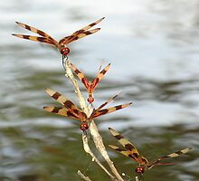 Halloween Pennant Dragonflies by Grayce Pedulla-Dillon