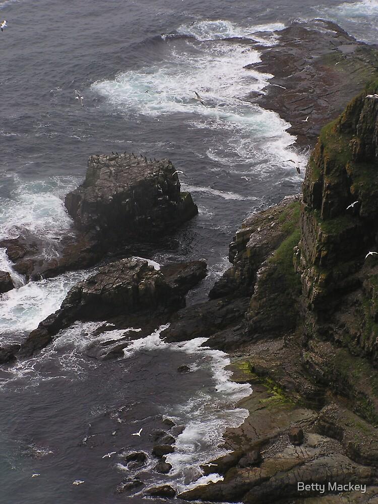 Coastline, Newfoundland by Betty Mackey