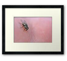 From the palm of your hand Framed Print