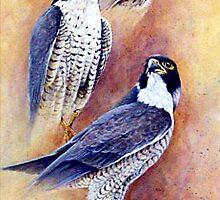 Falcon Studies (Original Sold) by eric shepherd