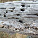 Termite Castle by Sarah Mosbey