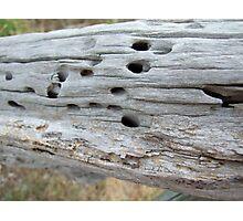 Termite Castle Photographic Print