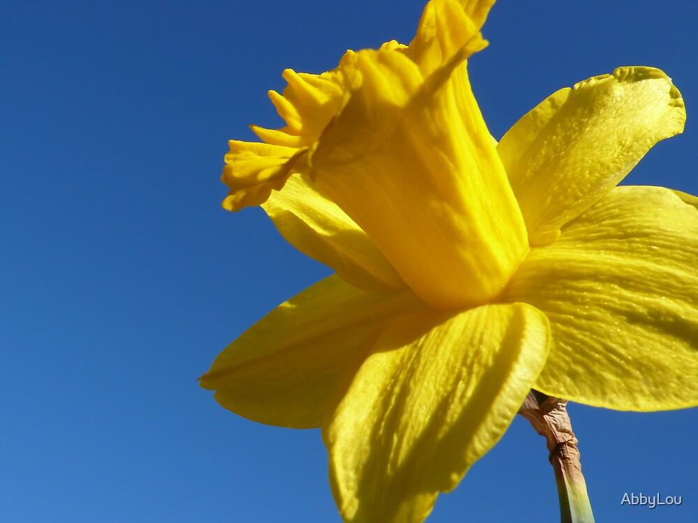 Springtime.. by AbbyLou