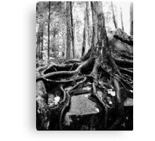 Survival in Nature Canvas Print