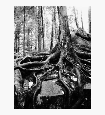 Survival in Nature Photographic Print