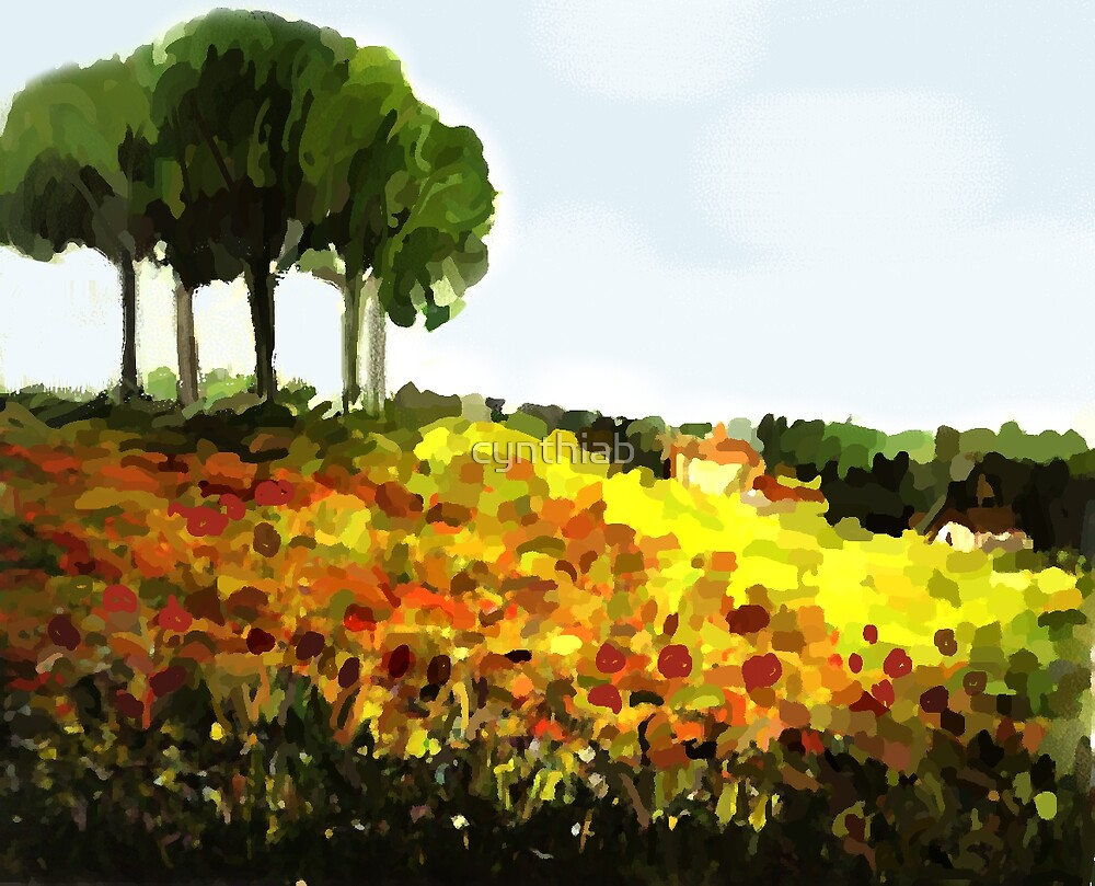 field of poppies by cynthiab