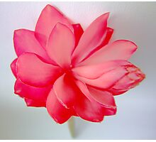 Popping Pinks Photographic Print