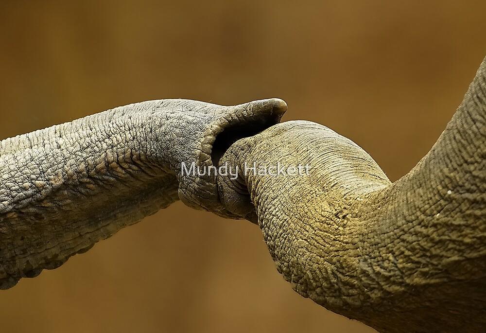Friendship by Mundy Hackett