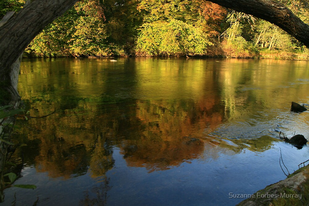 River of Reflections by Suzanne Forbes-Murray