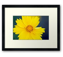 Flower macro Framed Print