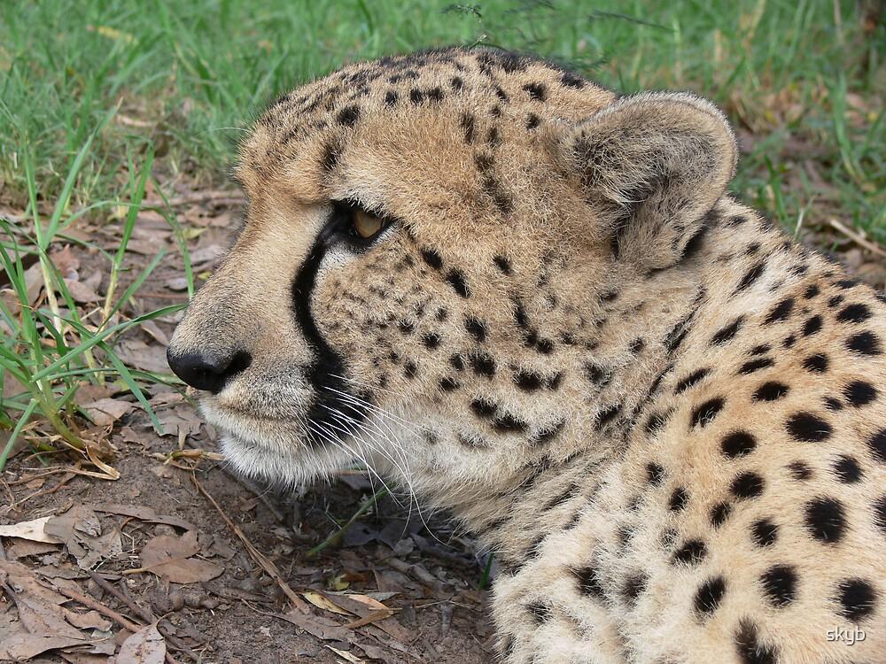 Cheetah profile by skyb