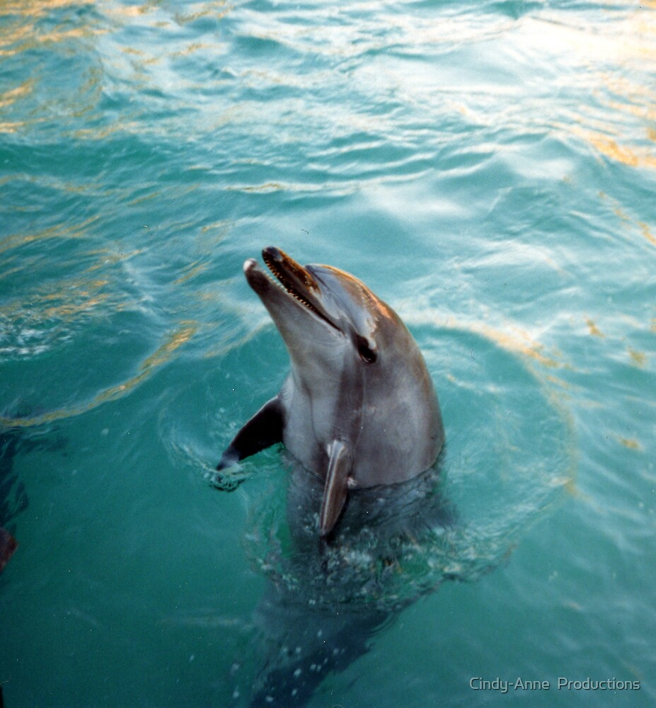 Dolphin play by Cindy-Anne  Productions