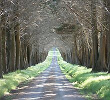 TREE TUNNEL by bellafocus