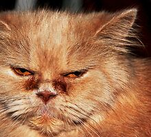 Grumpy Cat by Paul Hull