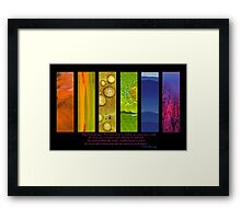Natural Splendors I Framed Print