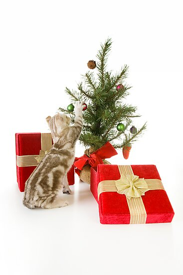 Christmas Kitten by idapix