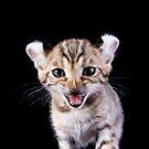 Funny Kitten by idapix